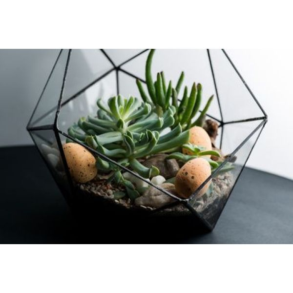 10 tapes pour un terrarium r ussi. Black Bedroom Furniture Sets. Home Design Ideas