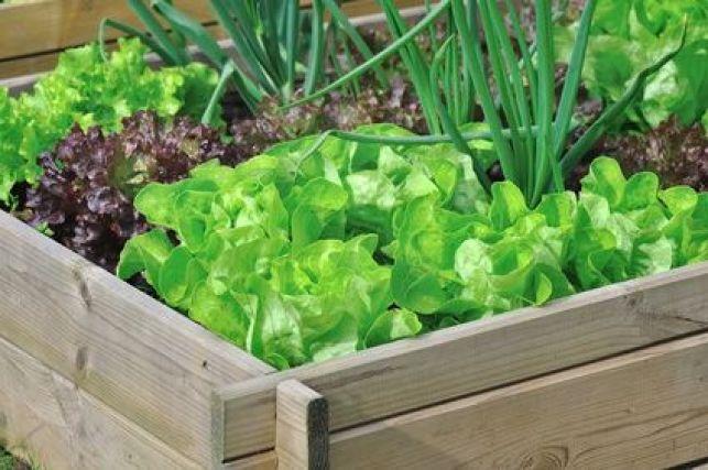 10 fruits ou légumes à planter dans un bac potager
