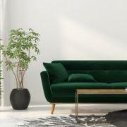 10 plantes dépolluantes pour votre intérieur