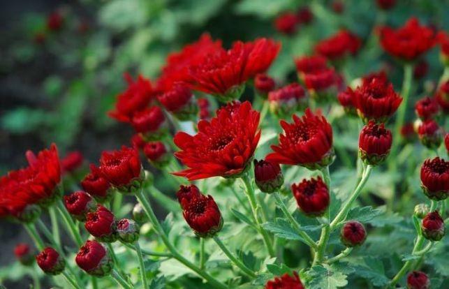 10 plantes/fleurs d'automne
