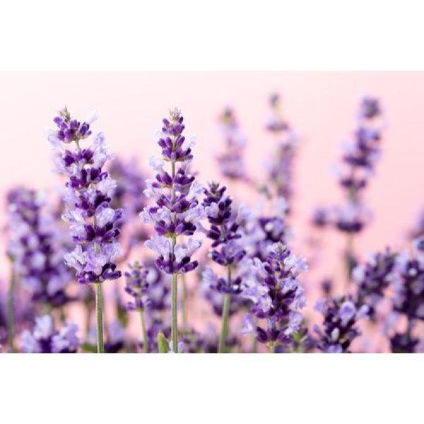 plantes odorantes pour un jardin parfumé