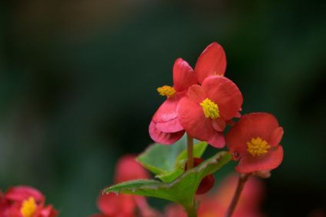 10 plantes toxiques pour votre intérieur