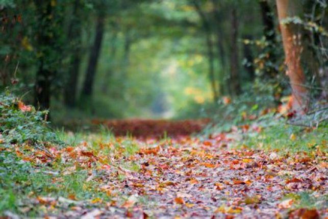 Acheter un terrain avec forêt