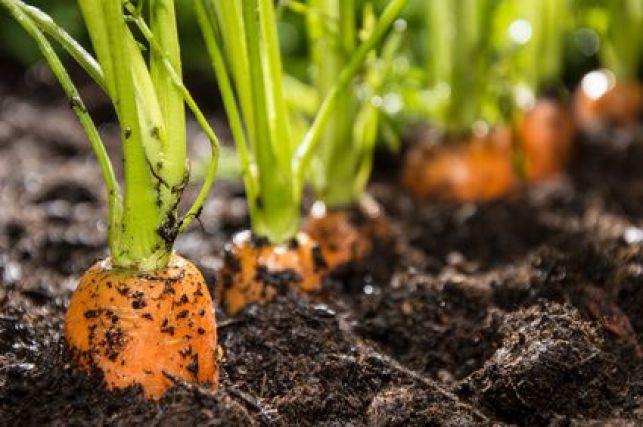 Amender le sol d'un jardin selon sa nature