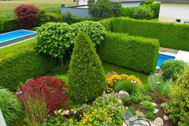Arbres et arbustes : la taille raisonnée