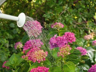 Arroser son jardin : les techniques pour économiser l'eau