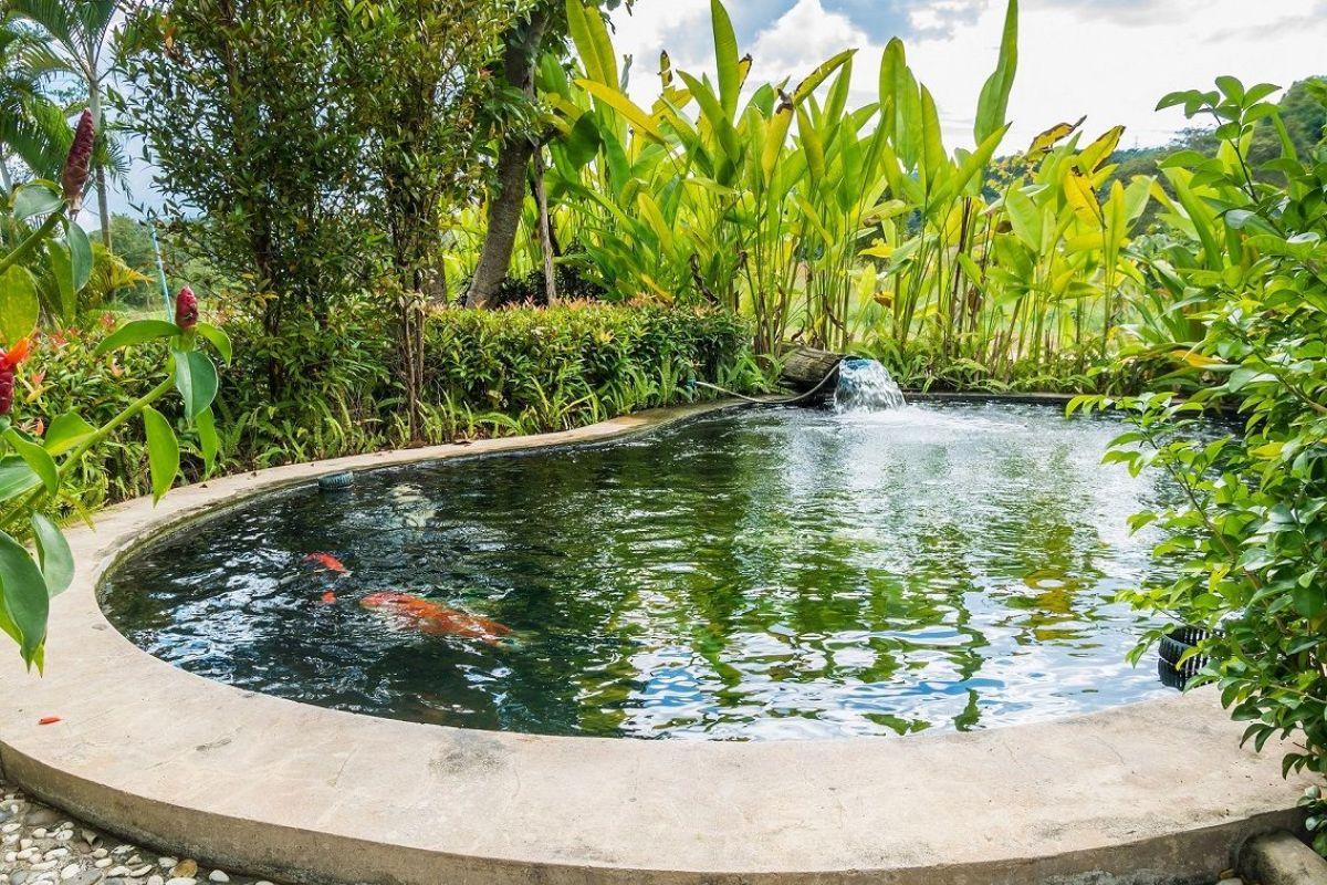 Poisson Rouge Bassin Extérieur bassin de jardin pour poissons : quelles sortes, comment les