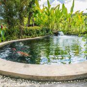 Bassin de jardin pour poissons