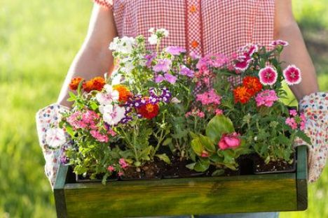 Choisir les arbres et plantes pour son jardin