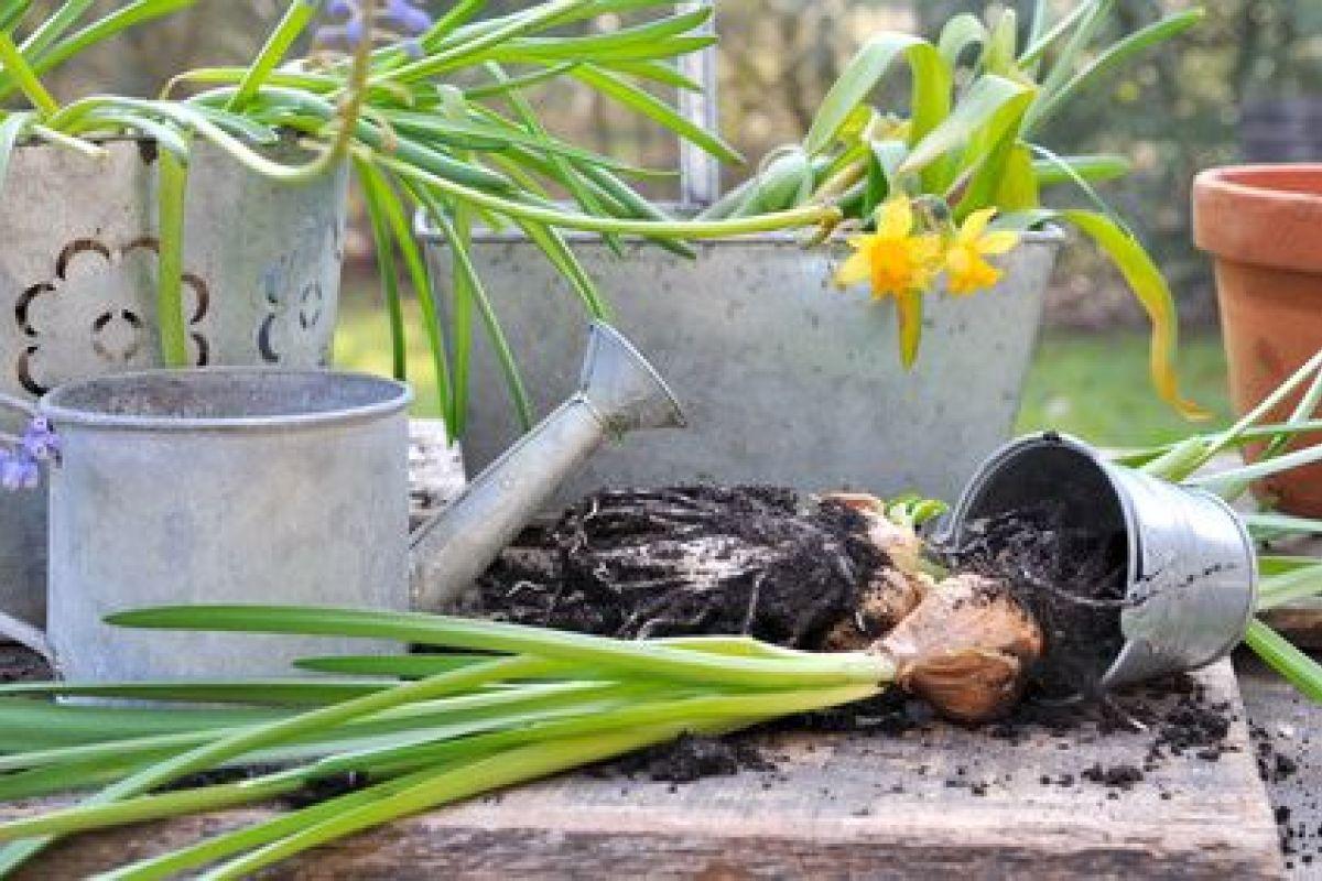 Comment Planter Du Muguet comment bien planter les bulbes à fleurs
