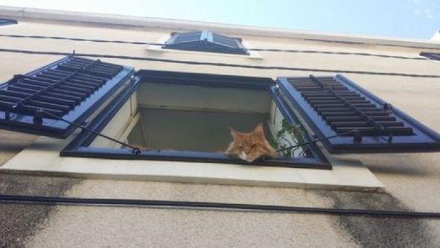 Comment choisir la couleur d'une fenêtre ?