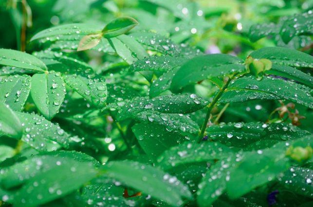 Comment créer un coin de fraîcheur dans un jardin ?