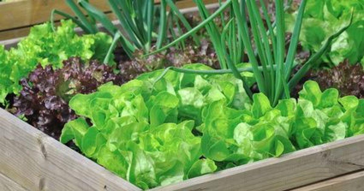 Comment cr er un micro jardin - Creer un jardin potager ...