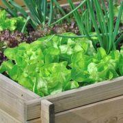 Comment créer un micro-jardin?
