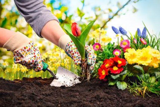 Création d'une mixed-border avec différentes variétés de fleurs et plantes