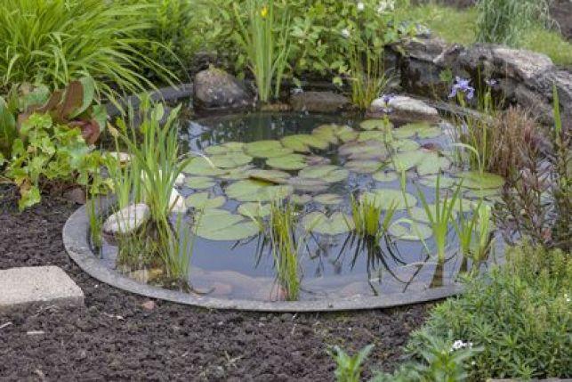 Comment éliminer les algues dans un bassin extérieur