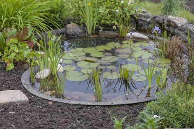 éliminer les algues dans un bassin extérieur