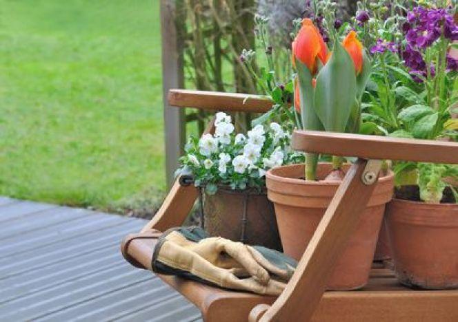 Comment hiverner vos plantes et fleurs en pot ?