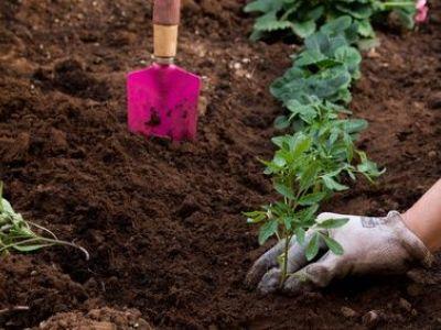 Comment identifier le mildiou dans un jardin ?