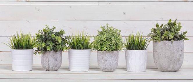 Comment jardiner en appartement ?