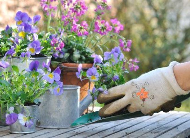 Comment multiplier des plantes ou des fleurs ?