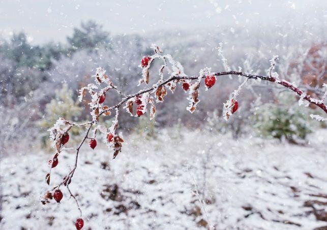 Comment protéger son jardin des gelées ?