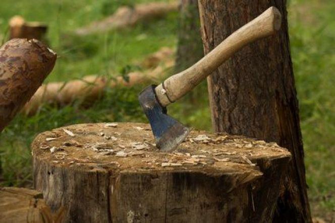 Comment se débarrasser d'une souche d'arbre ?