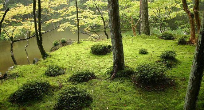 Le jardin de mousse du temple Saiho-ji de Kyoto