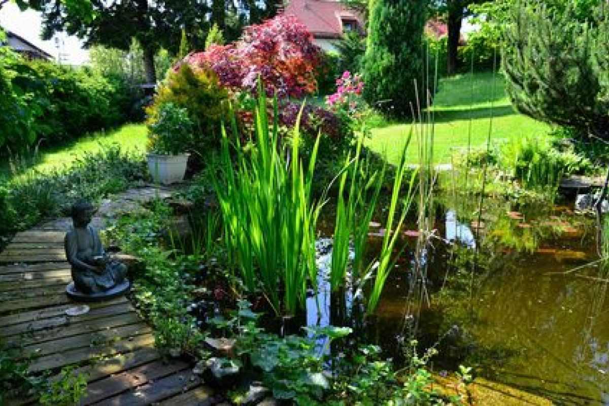 Comment Se Débarrasser Des Bambous Dans Le Jardin comment se débarrasser de la prêle dans un jardin