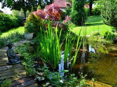 Comment se débarrasser de la prêle dans un jardin