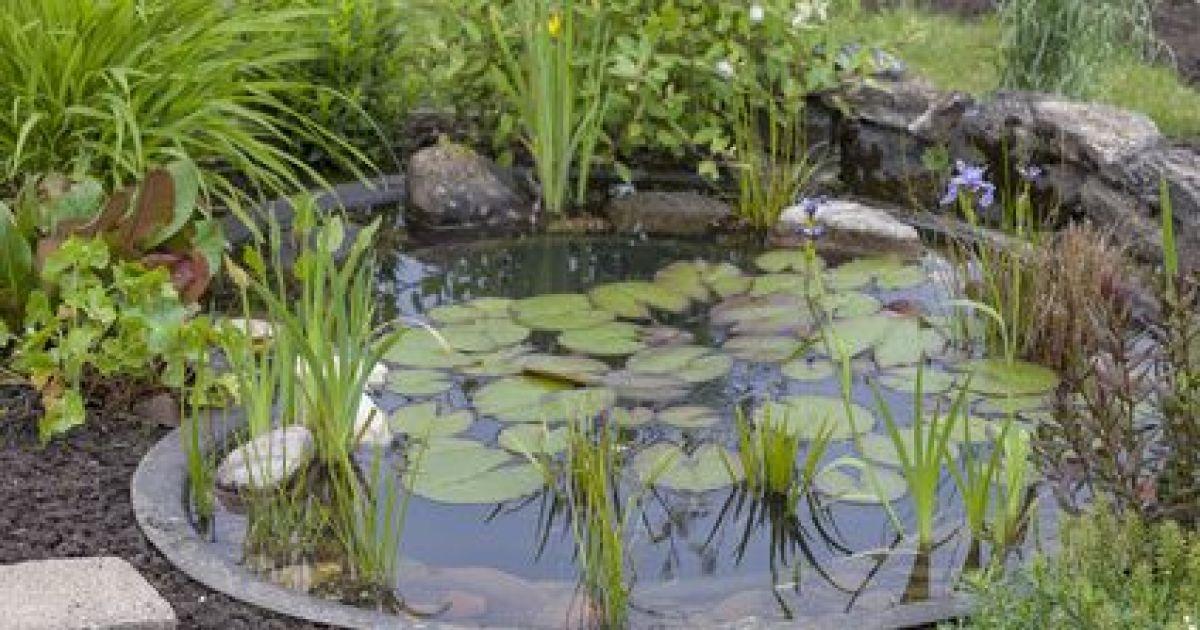 Construction d un bassin de jardin for Bassin et fontaine de jardin