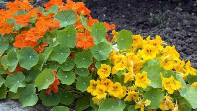 Créer des plates-bandes de fleurs dans un jardin