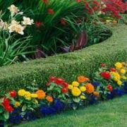 Créer un jardin à la française