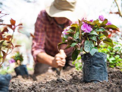 Créer un jardin champêtre