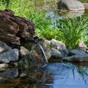 Créer un jardin de rocaille