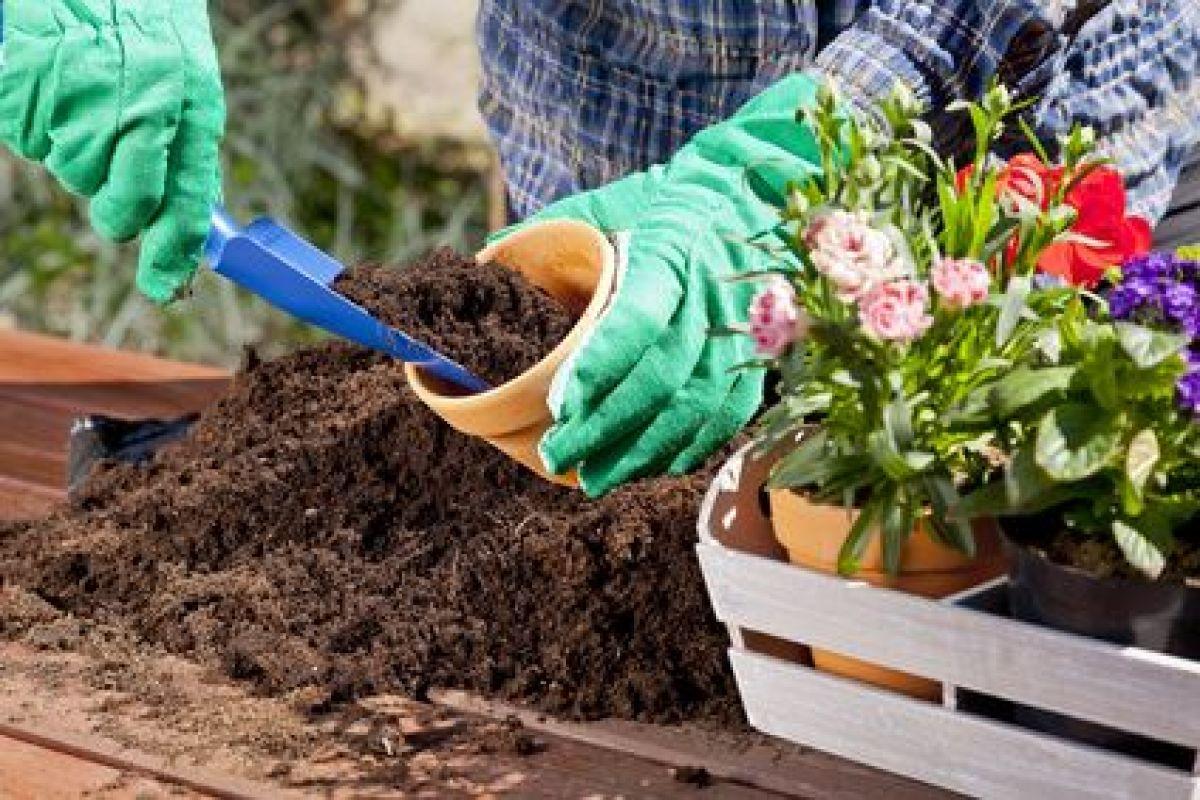 Aménagement D Un Parterre De Fleurs créer un massif de fleurs dans votre jardin