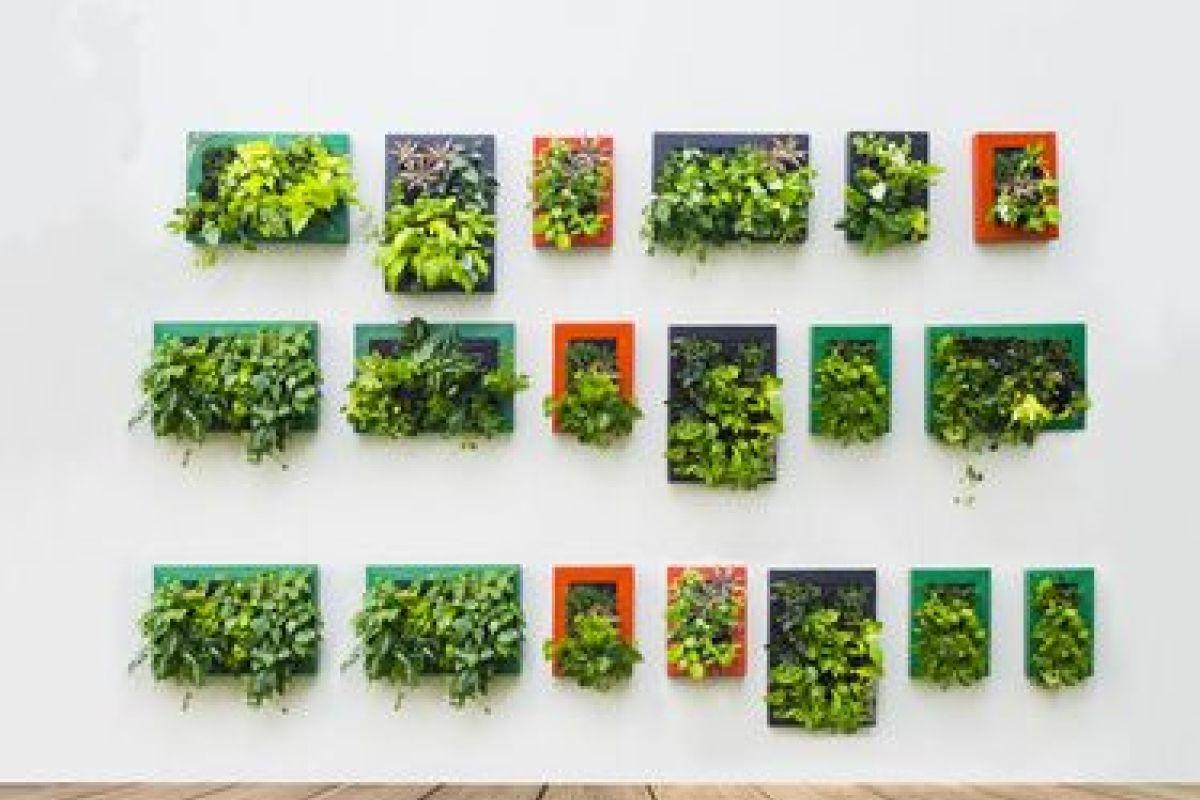 Plantes Pour Tableau Végétal Intérieur créer un mur végétal en intérieur