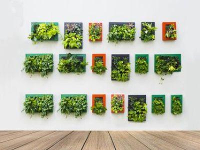 Créer un mur végétal en intérieur