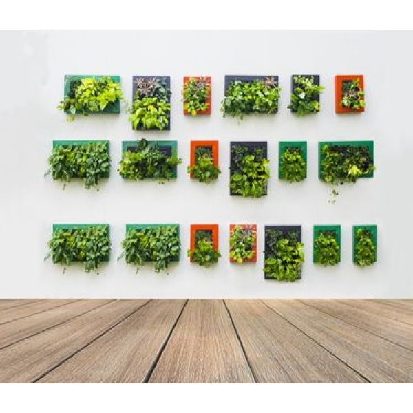 Cr er un mur v g tal en int rieur - Fabriquer son mur vegetal ...