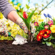 Créer une scène fleurie dans son jardin
