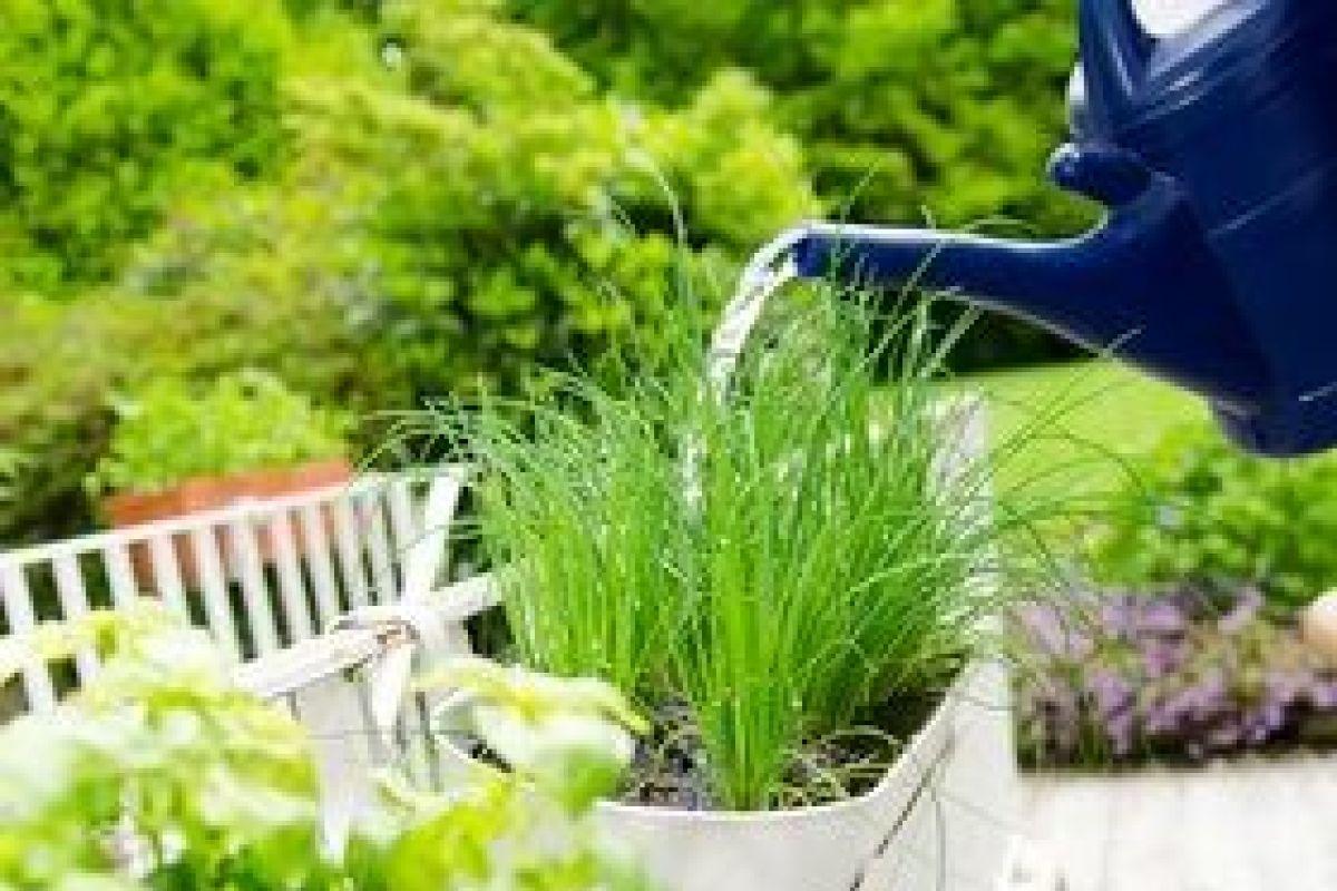 Plantes Aromatiques Sur Terrasse cultiver des plantes aromatiques dans un jardin
