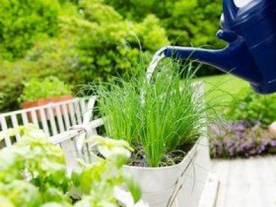 Cultiver des plantes aromatiques dans un jardin