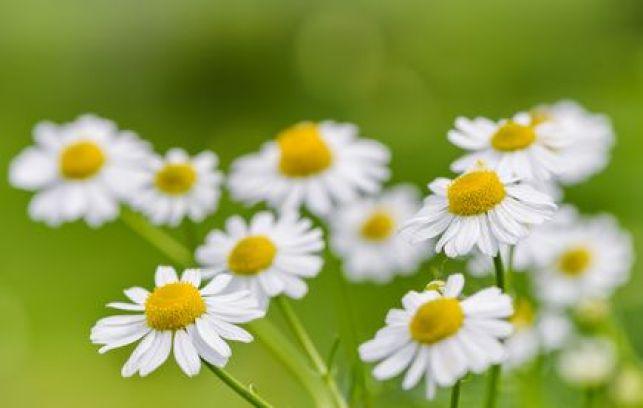 Cultiver des plantes médicinales dans votre jardin