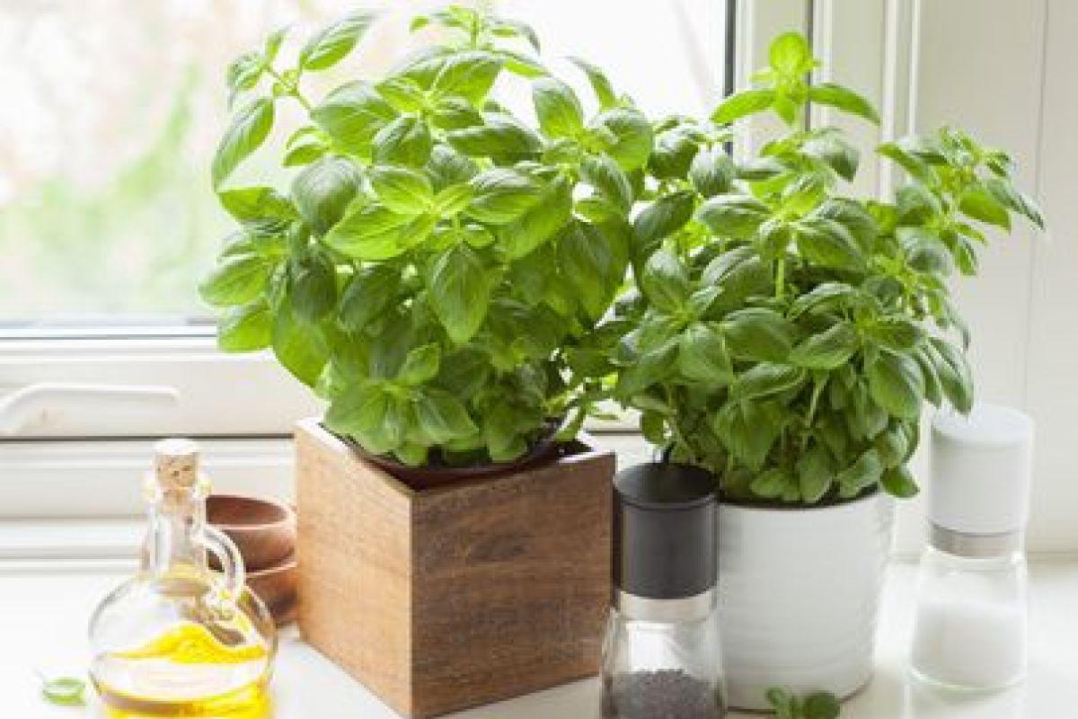 Plantes Aromatiques Sur Terrasse cultiver les plantes aromatiques dans sa cuisine
