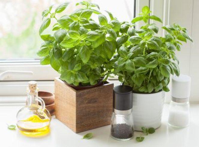 Cultiver les plantes aromatiques dans sa cuisine