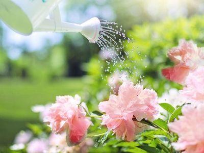 Découverte d'une source d'eau dans son jardin
