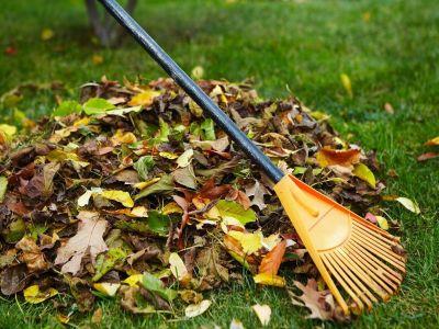 Défricher un jardin à l'abandon