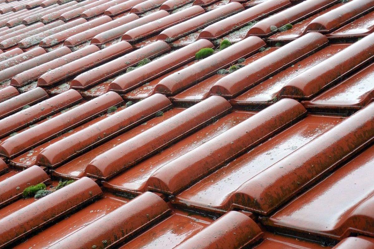 Anti Mousse Terrasse Beton démoussage toiture : comment enlever les mousses et lichens