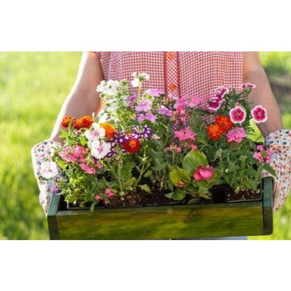 des bulbes forc s pour des fleurs toute l ann e. Black Bedroom Furniture Sets. Home Design Ideas