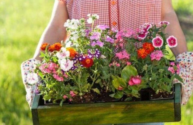 Des bulbes forcés pour des fleurs toute l'année